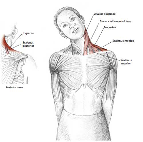 Neck and Shoulder Stretches | Health - BabaMail