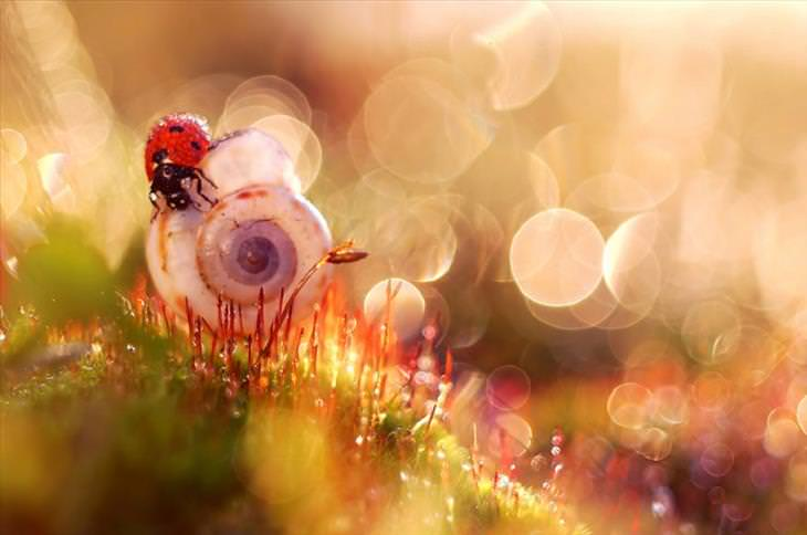 beautiful macro photography