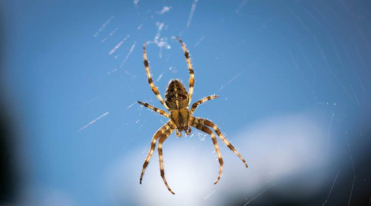 9 ways to get spiders out of your house tips and updates for How to get spiders out of your house