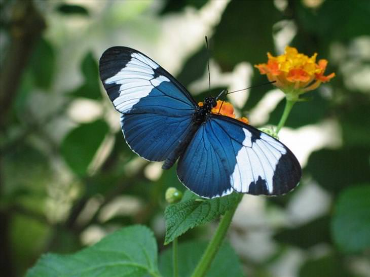 23 especially stunning rare butterflies nature babamail