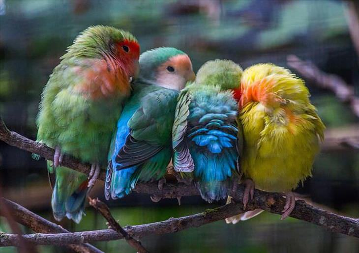 photos of birds huddling together