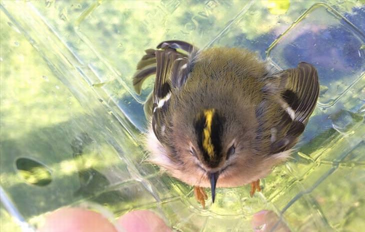 cute-little-birds