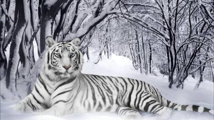 rare animal photos