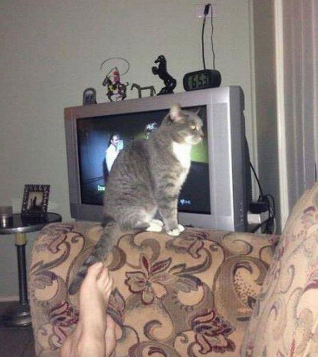 funny photos of cats