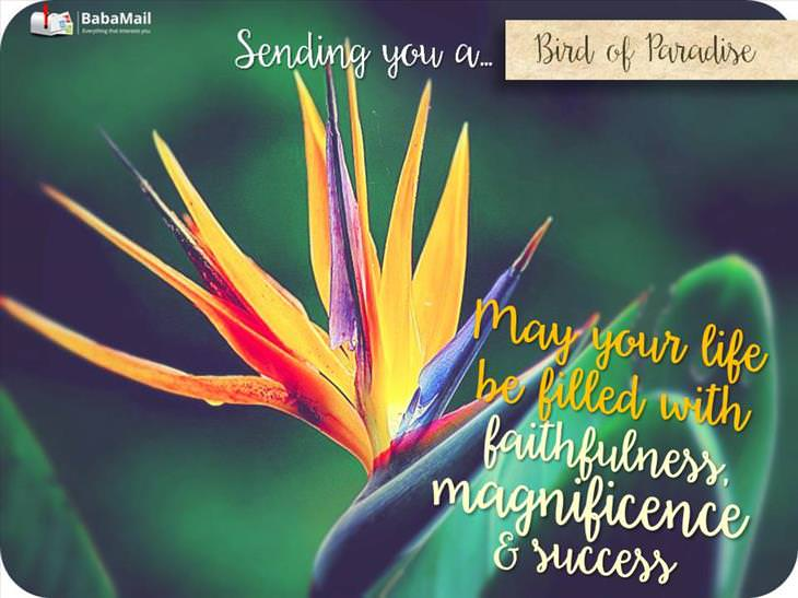 flowers greetings