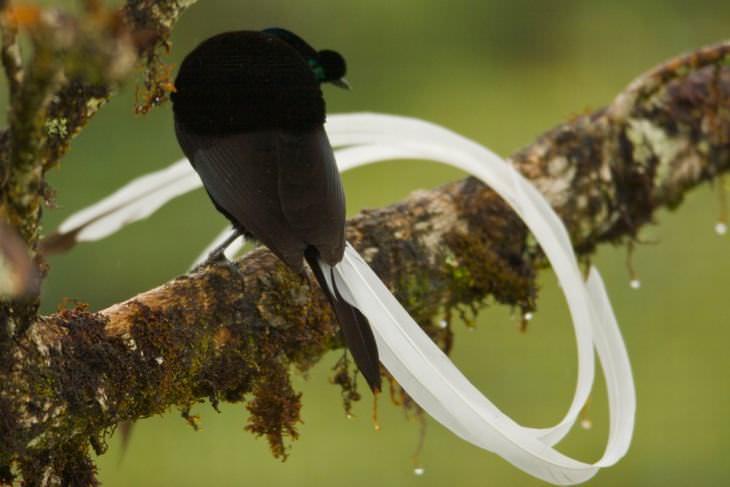 beautiful rare birds