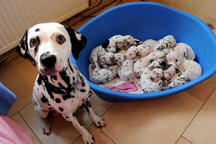 dog family photos