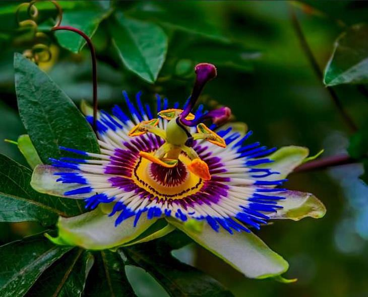 12 Of The World S Most Dazzlingly Colorful Flowers Nature Babamail