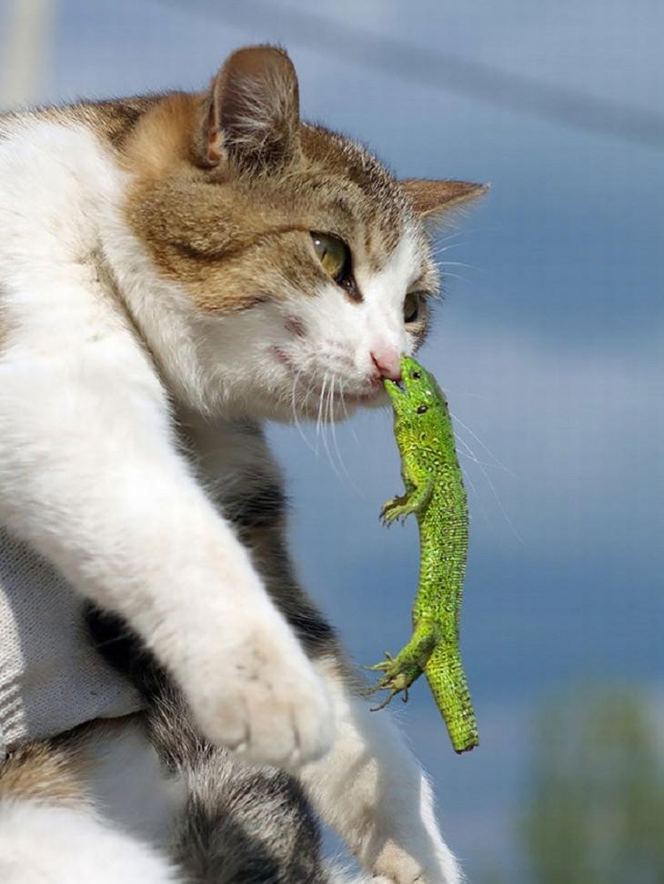 14-cat-fails