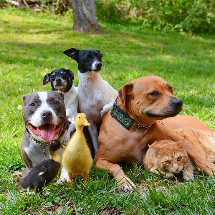 animal-family-adopted