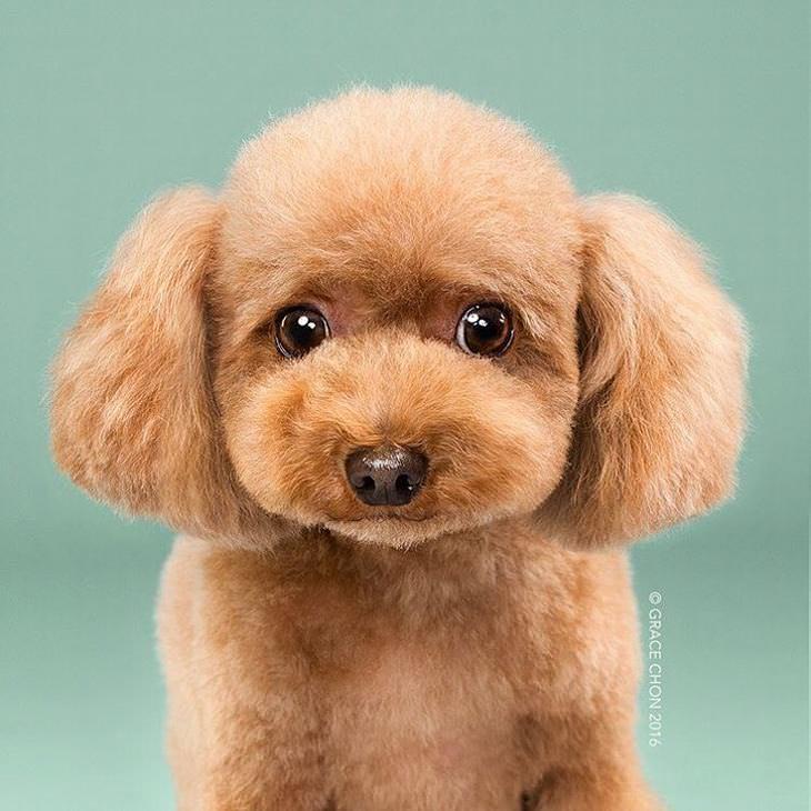 dog, hair cuts, switch box