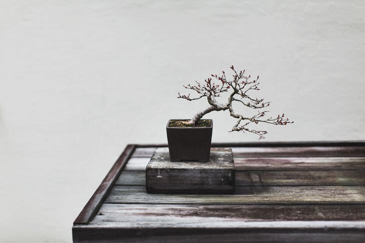 bonsai tree photography