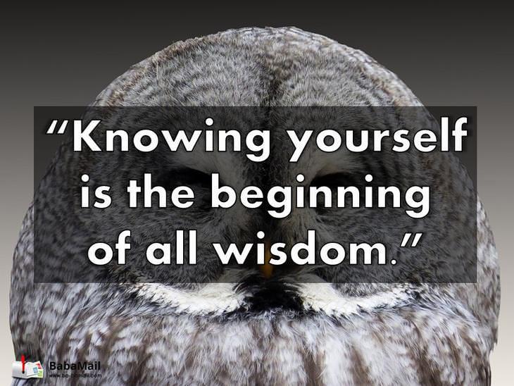 Aristotle, quotations