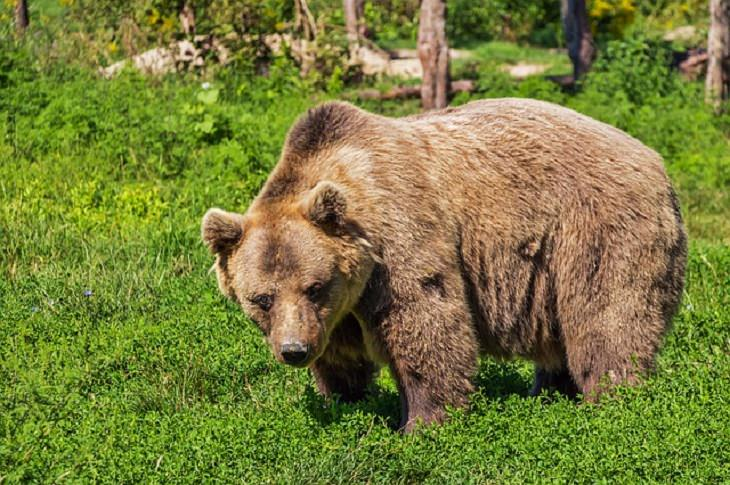 the bear and the aethiest