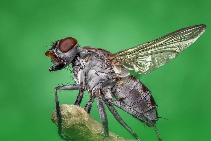 flies-home