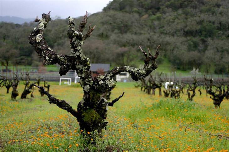wine, vineyards, travel