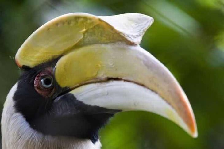 birds, beautiful, colorful