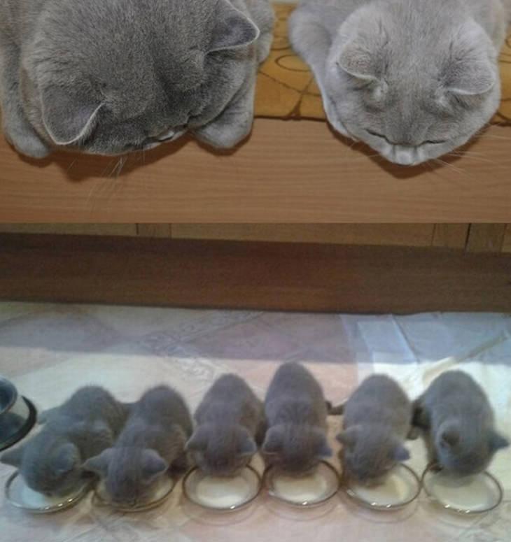 cats-kittens