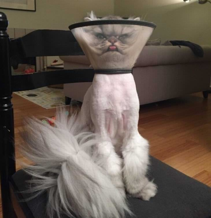 cats, strange