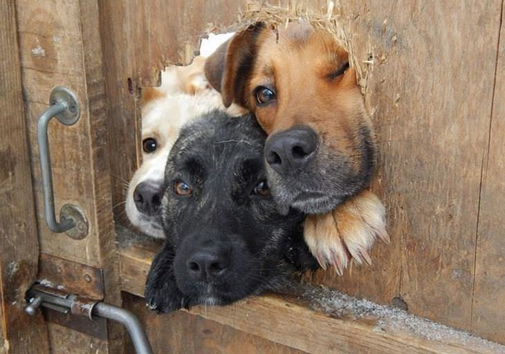 dogs, cute, fences