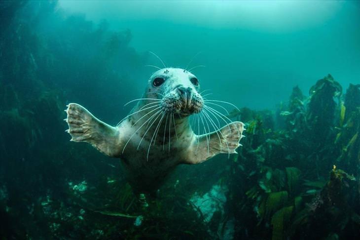 wildlife, photography, Britain