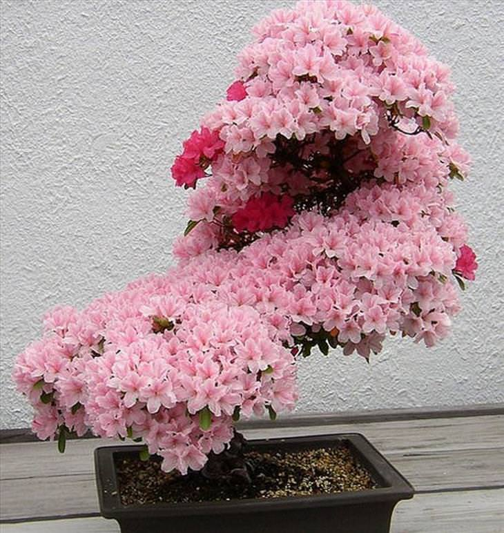 Bonsai, Trees, Japan, Nature