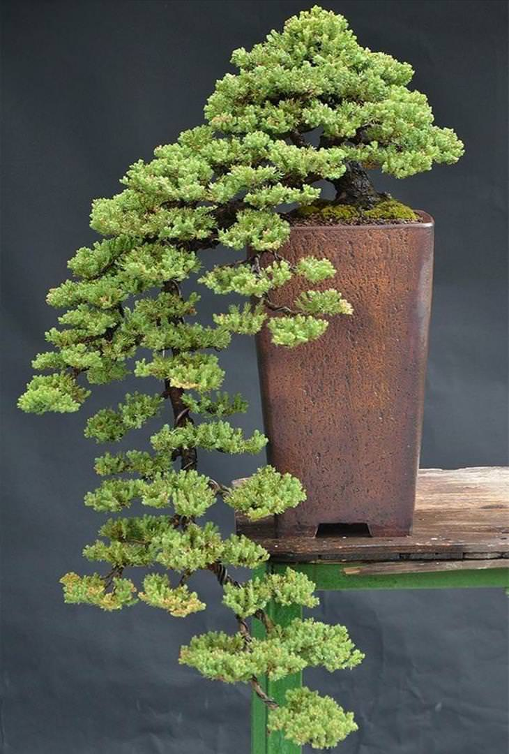 20 Brilliant Bonsai Trees You Have To See Nature Babamail