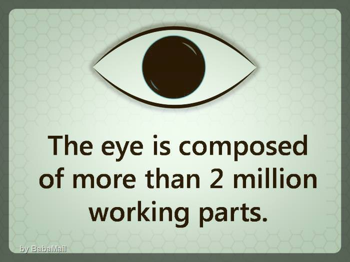 eye-facts