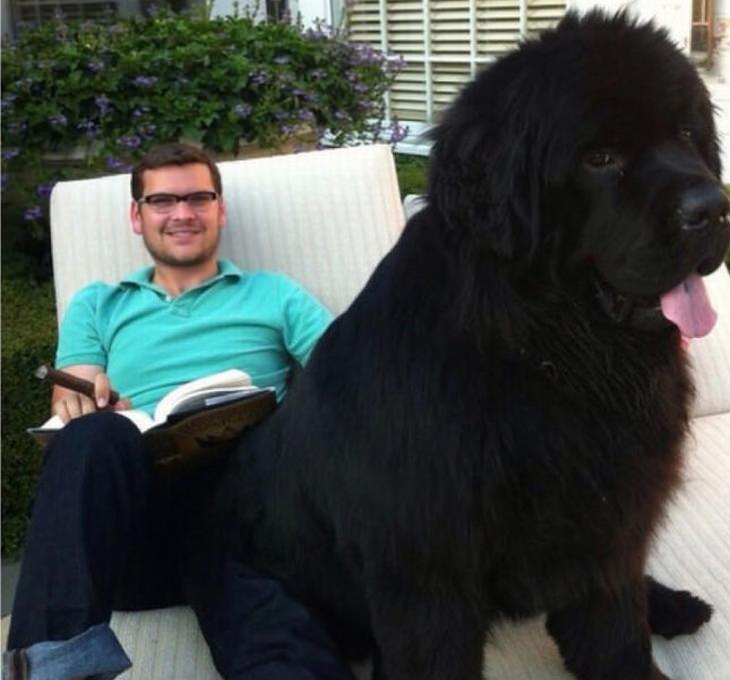 big-dogs