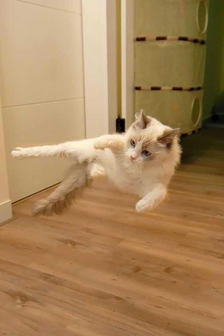 cat ninjas