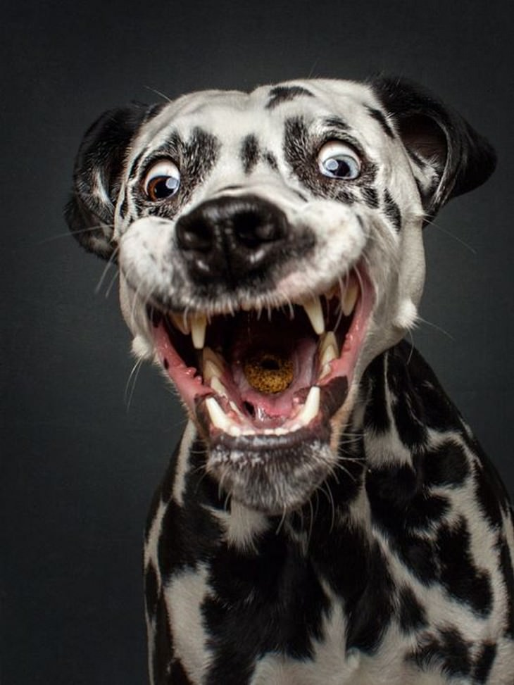 dogs, faces, funny