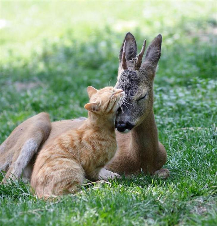 animals, hugging, cute