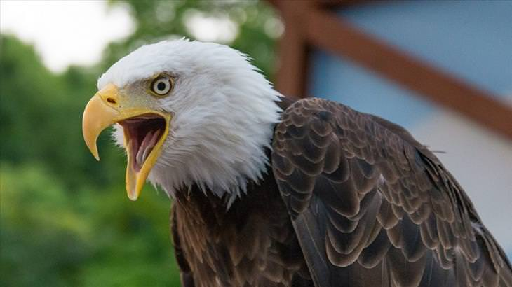 eagles, facts, amazing, beautiful, photos