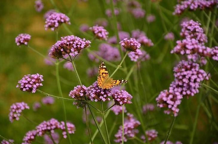 30 hermosas plantas para atraer mariposas a su jardín