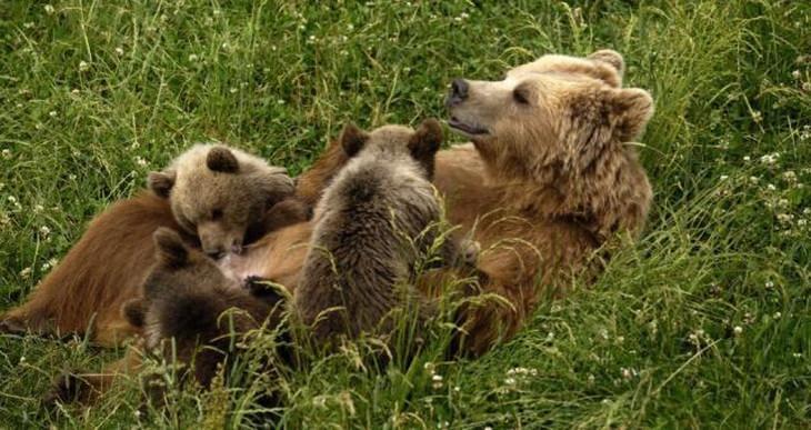 animals-together