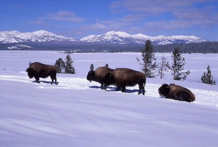 christian singles in yellowstone national park Stay in a comfortable hotel in west yellowstone and enjoy a tour of the upper loop of yellowstone national park  yellowstone, and glacier national parks.