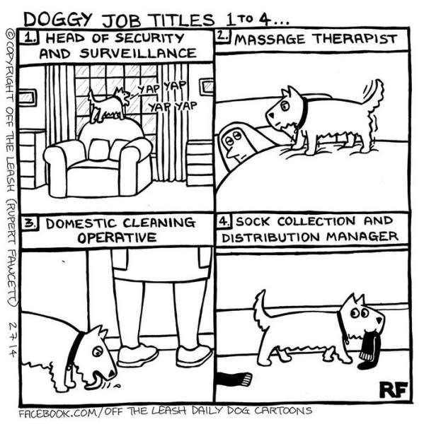 comics, pets, cute, funny