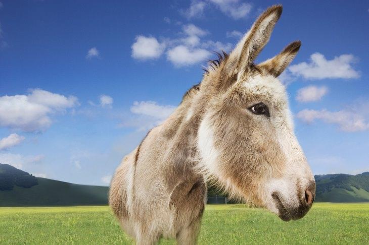 Funny - Joke - King - Donkey