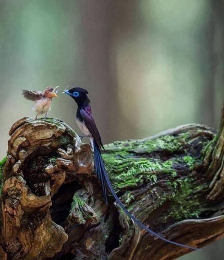 love in animal kingdome