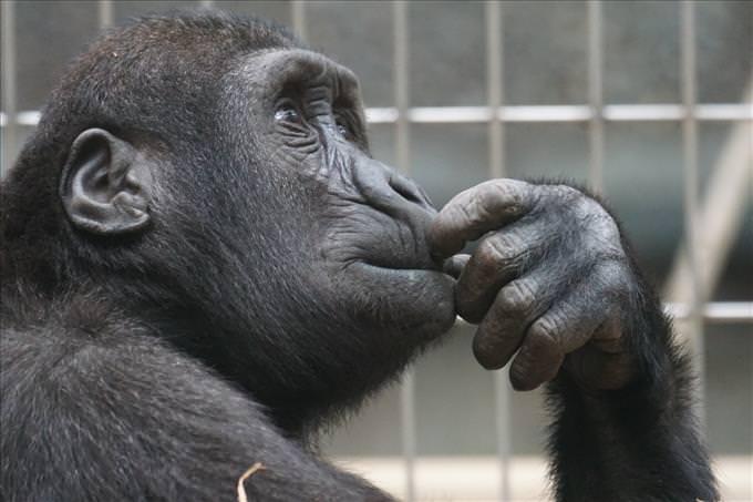 monkey thinking
