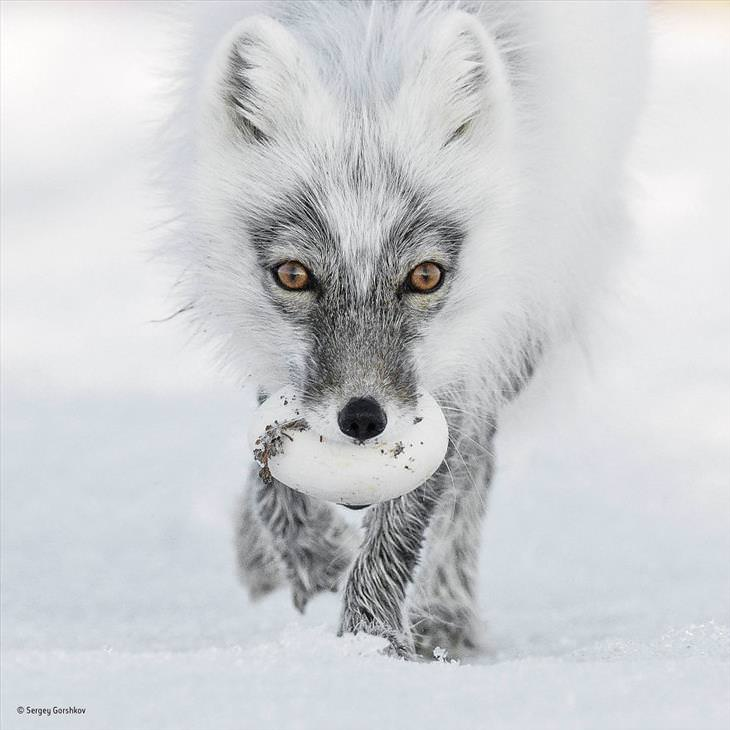 wildlife competition