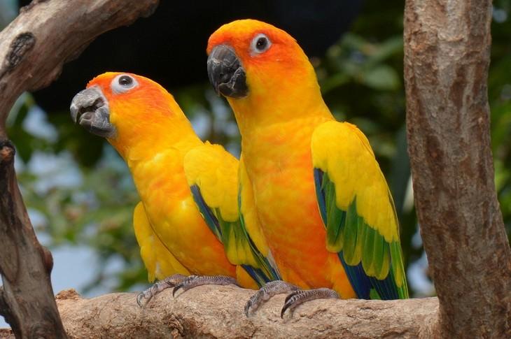 Pájaros coloridos