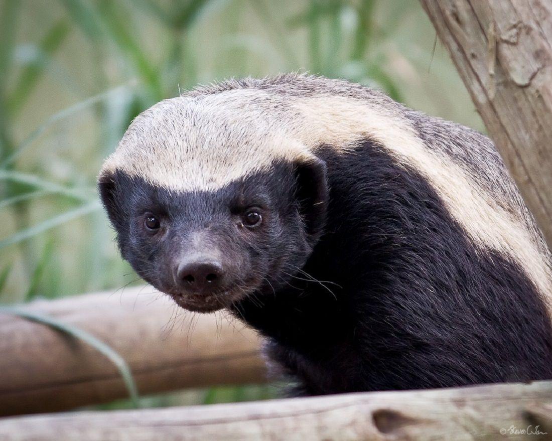 12 Adorable. But Dangerous Animals | Nature - BabaMail