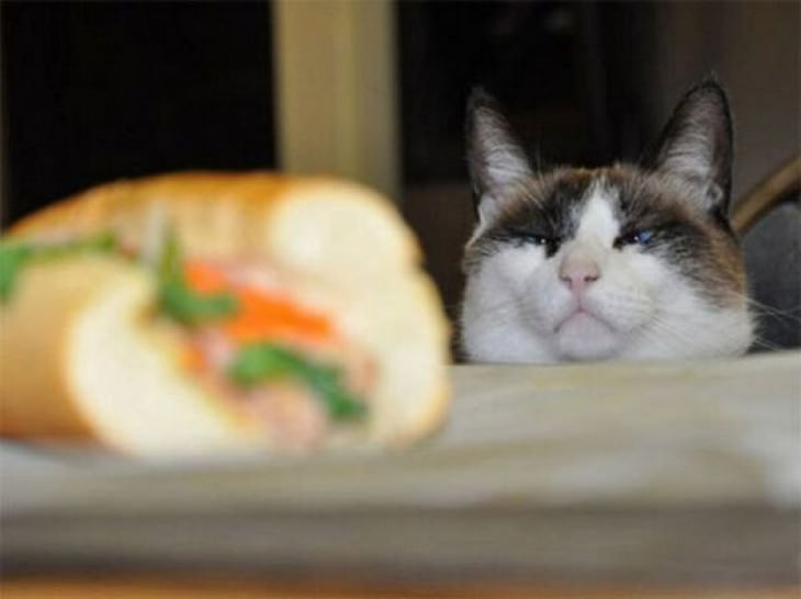 Why Do Cats Want You To Watch Them Eat
