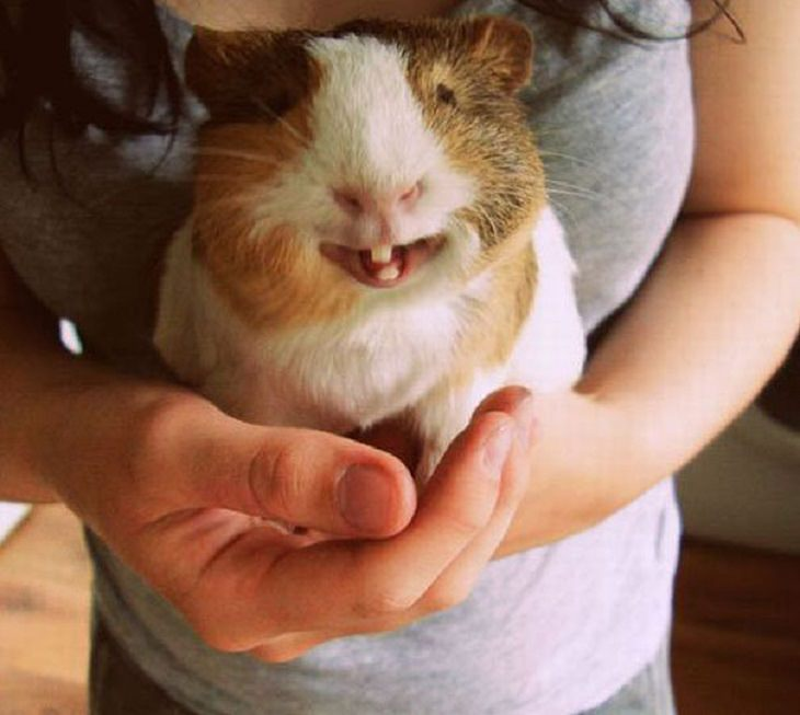 Smiling - Happy - Animals