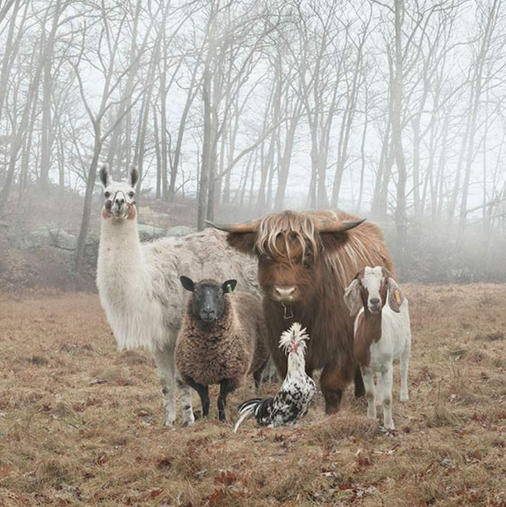 animal-album-covers