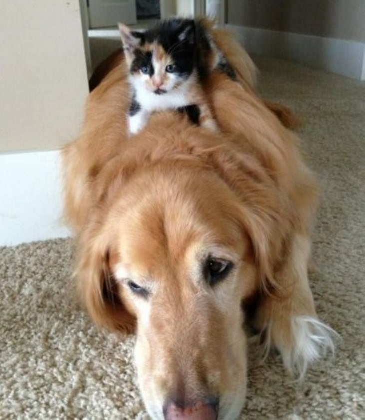 cute, cats, dogs, bossy
