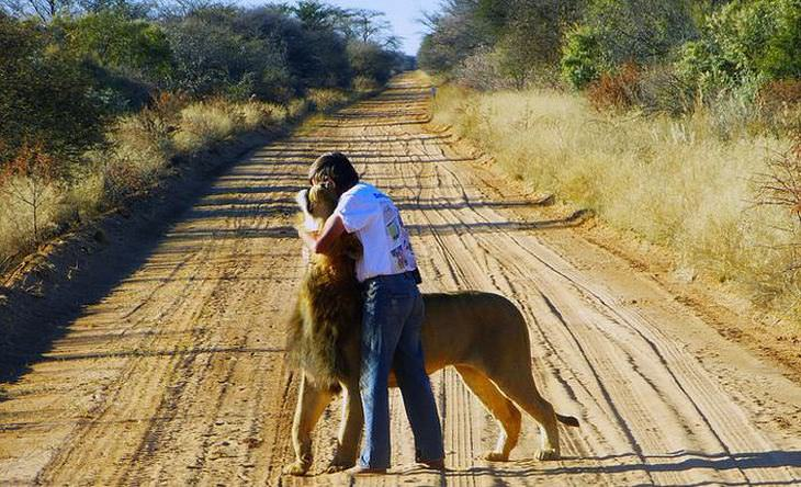 man and pet lion