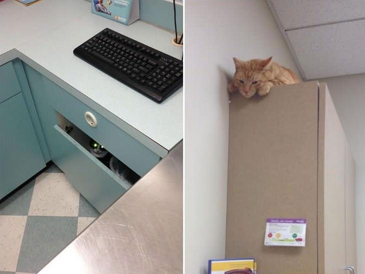 cats, cute, vet
