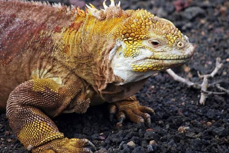 Animals - Galapagos - Islands